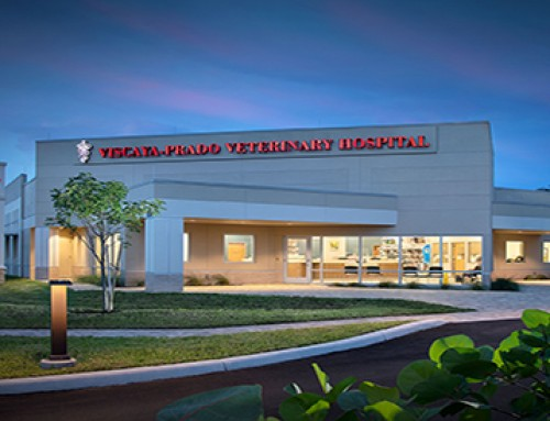 Viscaya-Prado Veterinary Hospital